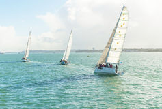 Yachts racing in auckland harbour Royalty Free Stock Photography