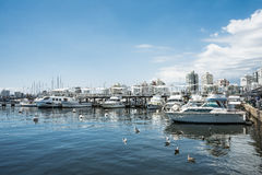 Yachts of the rich people in Punta del Este harbor, Uruguay. Punta del Este, Uruguay, February 29, 2016 - Yachts of the rich people in Punta del Este harbor Stock Photos