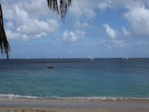 Yachts sailing in an annual competition in the caribbean stock video