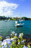 Yachts in Snails Bay in Birchgrove Sydney Stock Photography