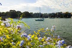 Yachts in Snails Bay in Birchgrove Sydney Stock Image