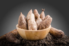 Yacon roots on a bowl. With dark background Stock Photos
