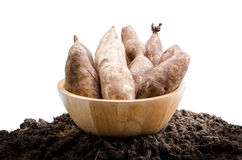 Yacon roots on a bowl. With nature background Stock Photos