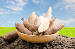 Yacon roots on a bowl. With nature background Stock Photo