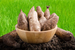 Yacon roots on a bowl. With nature background Stock Image
