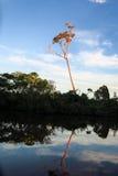 Река Yacuma Боливийские джунгли Стоковая Фотография RF