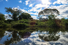 Yacuma flod Boliviansk djungel Royaltyfri Fotografi