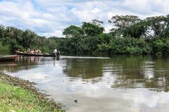 Yacuma flod Boliviansk djungel Arkivbilder