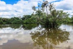 Yacumarivier Boliviaanse wildernis Stock Afbeeldingen