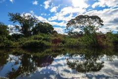Yacumarivier Boliviaanse wildernis Royalty-vrije Stock Fotografie