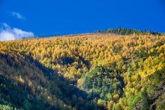 Yading national Reserve des Herbstblattes Stockbilder