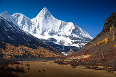Yading Nature Reserve China. Yang Mai Yong Peak in Yading Nature Reserve,  Daocheng County, Sichuan, China Royalty Free Stock Photography