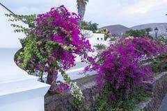 Yaiza, Lanzarote, Kanarische Inseln, Spanien lizenzfreies stockfoto
