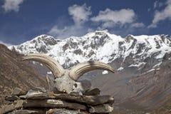 Yak κρανίο στα βουνά του Ιμαλαίαυ στο Νεπάλ. Στοκ Φωτογραφία