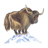 Yak. In snowy himalayas. Hand drawing Stock Photo
