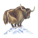yak Arkivfoto