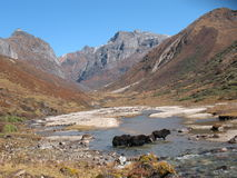 Yak habitats. The yaks live in a palace provided by mother nature Royalty Free Stock Image