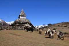 Yak herd carrying goods and stupa. Scene near Namche Bazar Stock Photos