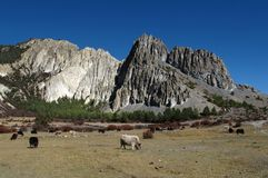 Yak herd and limestone formation Royalty Free Stock Photography