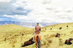 Yak herd and nomad with horse  in the tibetan highlands Royalty Free Stock Photography