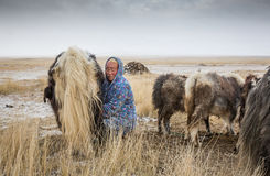 Yak herder Royalty Free Stock Images