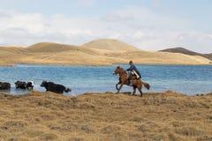 Yak herding in Kyrgyzstan Royalty Free Stock Photos