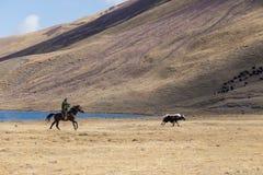 Yak herding in Kyrgyzstan Stock Image