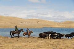 Yak herding in Kyrgyzstan Stock Photo