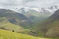 Yak looking at river valley, Tien Shan mountains Stock Photo