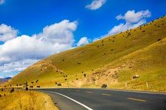 Yak mit gelbem Feld auf dem Hügel Lizenzfreie Stockfotos