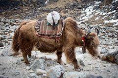 Yak in the mountains Royalty Free Stock Photo
