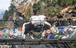 Yak på bron i Nepal Fotografering för Bildbyråer