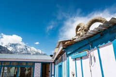 Yak skull on a building. Royalty Free Stock Photos