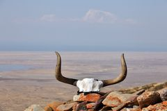 Yak skull decorated with Buddhist mantras Royalty Free Stock Photography