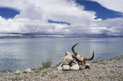 Yak skull at Namtso lake Royalty Free Stock Images