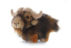 Yak Stuffed Animal Royalty Free Stock Photos