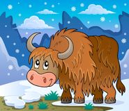 Yak theme image 2 Stock Photos