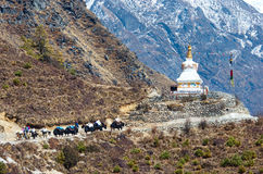 Yak on the trail  in Nepal Royalty Free Stock Images