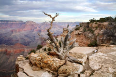 Yaki Point Royalty Free Stock Photo