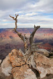 Yaki Point, Grand Canyon Stock Photos