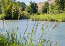 Yakima River Royalty-vrije Stock Foto