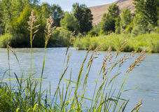 Yakima rzeka Zdjęcie Royalty Free