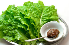 Yakiniku lettuce called Sanche Stock Images