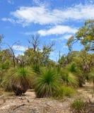 Yakka Trees: Australian Bushland royalty free stock photography