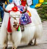 yaks Image libre de droits