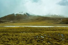Yaks on the field. Yaks on the highland field in Tibet stock images