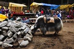 Yaks frôlant avec des touristes sur le marché en plein air, Manali, Himachal Pradesh, Inde Images libres de droits