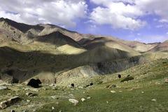 Yaks frôlant dans le plateau de Nimaling Images libres de droits
