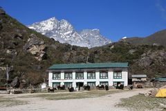 Yaks in front of a lodge in Khumjung. Scene in the Everest National Park, Nepal royalty free stock photo