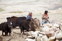 Yaks in Ladakh, India royalty-vrije stock afbeelding